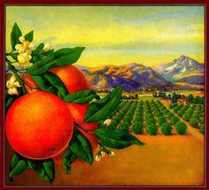 Custom Personalized Orange Citrus Fruit Crate Label Art Print GREAT GIFT!!! 03 #ASLICEINTIME