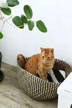 使えるIKEAのバスケットが猫の夏用ベッドにピッタリ