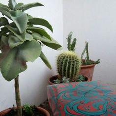 Suculenta y Cactus.