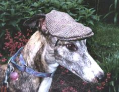 This sporty Irish hat fits the character of greyhounds especially, but will suit the personality of many dogs. You can make them out of any fabric, but the Irish plaids look the best – a very distinguished yet playful look for your hound. Two other hats on page also