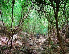 File:Brookesia micra habitat.jpg