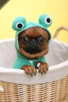 Cute Puppy In Frog Costume,  Click the link to view today's funniest pictures!