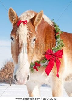 colorful pictures of draught horses Closeup of a Belgian draft horse with a Christmas wreath and a bow in Christmas Horses, Cowboy Christmas, Christmas Animals, Christmas Wreaths, Christmas Pets, Merry Christmas, Christmas Scenes, Christmas Minis, Pretty Horses
