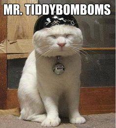 20 Ridiculous CatNames  astrologycat.com