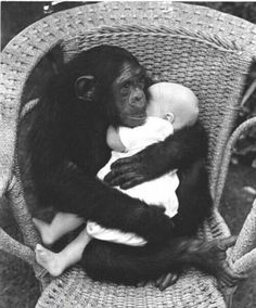 Not what i Will do....baby in the arms of a monkey. But it s sweet to look at. S7of9