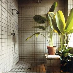 Plants in the shower/ bathroom? Yes please! Gives oxygen, promotes relaxation and they probably appreciate the humidity :)
