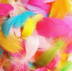Easter Coloured Feathers