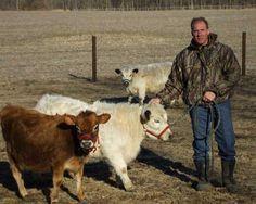 Jersey and White Park. Miniature milk cattle, Jersey and White Park on the right. Cattle Farming, Livestock, Goat Farming, Dwarf Cow, Minature Cows, Newborn Christmas Pictures, Dexter Cattle, Farm Animals, Animals