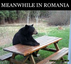 Caption and share the Waiting patiently for turkey dinnerp meme with the Bad Luck Bear meme generator. Discover more hilarious images, upload your own image, or create a new meme. Animal Pictures, Funny Pictures, Funny Pics, Funniest Pictures, Bear Pictures, Funny Stuff, Funny Animals, Cute Animals, Animal Puns