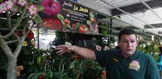 De to los colores en el Festival de las Flores en Aibonito -...