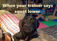 gym humor squats squat lower trainer workout funny