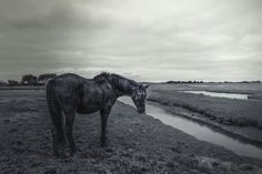 A horse alone in his meadow - A horse