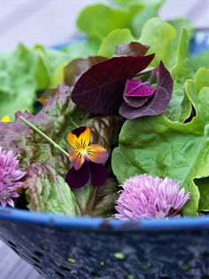 Top Plants for Homegrown Salads  Homegrown fresh salad greens are a tasty way to get quick results from your vegetable garden. Pick these varieties to add color, taste, and texture to your table.