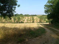 La ferme de Vanessa: Implantation d'un couvert végétal! Agriculture Biologique, Country Roads, Farm Gate