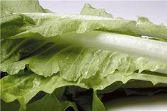 Düşük kalorili, A, B ve C vitaminleri açısından zengin, bol posa içeren lahananın ayrıca tohumları da idrar söktürmeye yardımcı olur.
