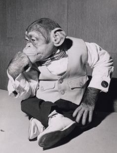 This chimp is deep in thought