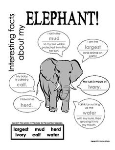 My All About Elephants Book - African Animal Unit Study