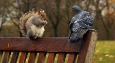 Friends - beautiful, squirrel, animals, dove