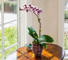 Common House Plants That Filter Your Air All Day : 12 Common House Plants Tha. Common House Plants That Filter Your Air All Day : 12 Common House Plants Tha. Cat Safe House Plants, Houseplants Safe For Cats, Common House Plants, Cat Plants, House Plants Decor, Plant Decor, Gerbera, Air Filtering Plants, Cat Friendly Plants