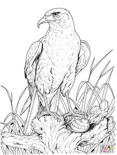 Eagle coloring pages 8 Eagle Coloring Pages Pinterest Eagle