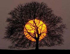 The moon is wonderful behind the deciduous tree!