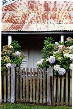 Cottage Tin roof for barn and way fence is finished for front courtyard of house. Imagine fence on top of stone curbTin roof for barn and way fence is finished for front courtyard of house. Imagine fence on top of stone curb Garden Shed Ideas Australia, Ivy House, Australian Homes, Entrance Gates, Garden Gates, Garden Sheds, Garden Inspiration, Beautiful Gardens, Beautiful Homes