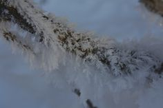 snow feathers, captured by Margie