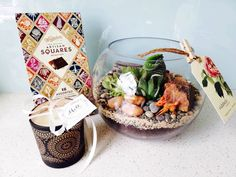 Choccies, a candle and a large terrarium, yes please! Make someones day and have this large terrarium gift pack delivered straight to their door. Large Terrarium, Terrariums, Auckland, Artisan, Packing, Table Decorations, Flowers, Gifts, Bag Packaging