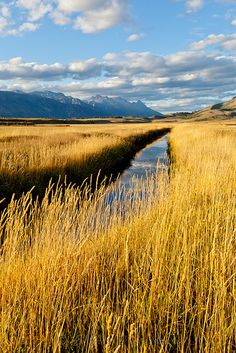 Fields of Gold | This image was taken off Pratt Road outside Jackson, Wyoming