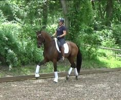 Prozack Folhoj - Top future prospect for the international FEI ring! Very modern horse that has everything you want to make it to the top in the sport.Won at 3rd level and piaffe/passage started and he's a natural! A great character! $75,000
