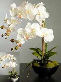 macetas de orquideas - Google Search