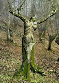 For all nature lovers today World Inside pictures have a magnificent collection of natural photos. Nature is definitely the most impressive artist of the world. Art Et Nature, Nature Images, Tree Art, Tree Of Life, Amazing Nature, Amazing Art, Belle Photo, Mother Earth, Garden Sculpture