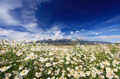 Letné Tatry High Tatras, Genius Loci, Heart Of Europe, Big Country, Bratislava, Capital City, Free Time, Wild Flowers, Mountains