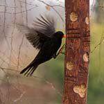 To isté kŕmidlo a drozd / Bird feeder from log & blackbird Bird Baths, Blackbird, Bird Feeders, Birds, Houses, Crafty, Animals, Tatoo, Homes