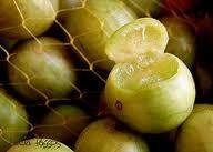 Umbú é uma fruta nativa, característica da região semi-árida brasileira, que vem sofrendo eliminações periódicas, pela utilização das áreas com formação de lavouras e pastagens, correndo risco de extinção e há uma seleção negativa, promovida pelo extrativismo.