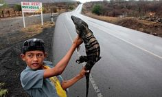 A boy holds up an iguana for sale on the highway in the north of Managua. Nicaraguans are being encouraged to eat the reptiles as a nutritious alternative to more conventional meat.