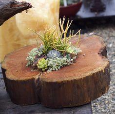 Succulent stump!  http://shop.rogersgardens.com/browse.cfm/everyday/2,240.html