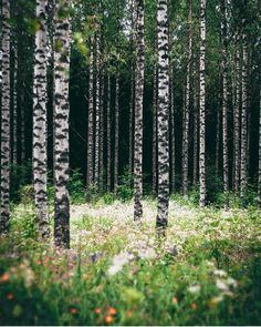 Finnish woods. Photo by Janni Laakso