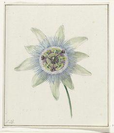 Passion Flower, Jean Bernard, c. 1825