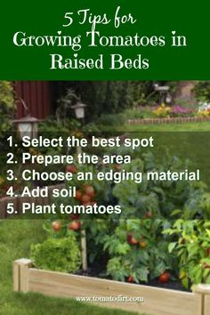 Why growing tomatoes in raised beds is fun practical and easy. Five steps to take to set up raised beds. Advantages of raised beds for tomato gardeni Growing Tomatoes Indoors, Tips For Growing Tomatoes, Growing Tomatoes In Containers, Growing Vegetables, Grow Tomatoes, Dried Tomatoes, Cherry Tomatoes, Building A Raised Garden, Raised Garden Beds