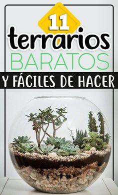 Cactus Terrarium, Cactus Plants, Succulent Landscaping, Planting Succulents, Suculentas Diy, Green Zone, My Secret Garden, Orchidaceae, Garden Ideas
