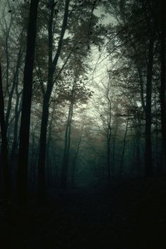 The Deep Dark Wood: Dark And mysterious forest Better Day, Nocturne, Samhain, Far Away, Dark Wood, The Great Outdoors, Dark Side, Mists, Nature Photography