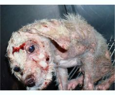 maltrato animal perros - Buscar con Google