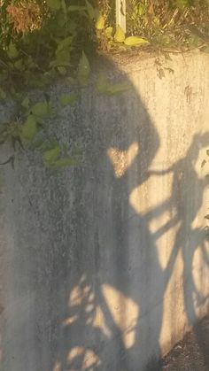 Bicicletta ombra e cuore