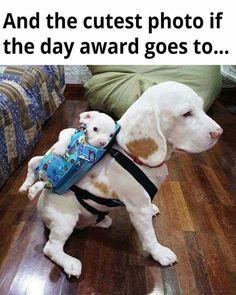 So cute dogs!