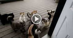 Farmer Corey Karmann has a huge gang of twelve kitties that all live at the farm with him. They are excellent at keeping the mice and rats at bay and stops them from overtaking the