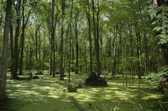 Image result for landscape art swamps