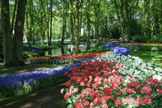 The largest and most colorful garden in the World, Keukenhof is located in Lisse in the Netherlands. Known as 'the Garden of Europe,' Keukenhof has more than 7 million bulbs in bloom, with a total of 800 varieties of tulips.