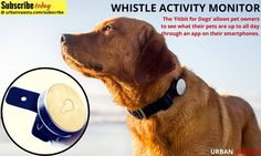 Whistle Activity Monitor : Your pet's location and activity sent directly to your phone.