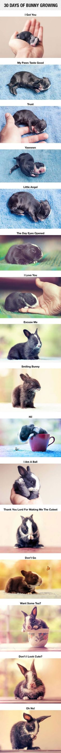 30 Days Of A Bunny Growing cute animals rabbit adorable animal pets baby animals bunny